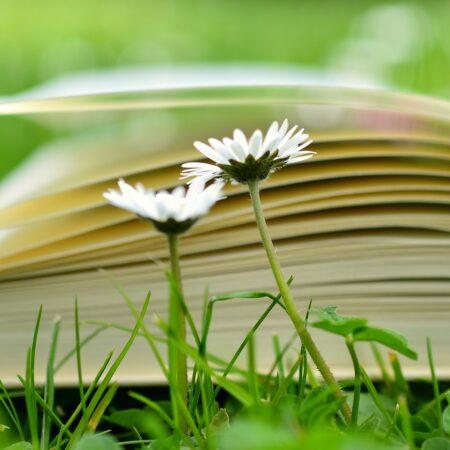 book-2304389_1920 (1)